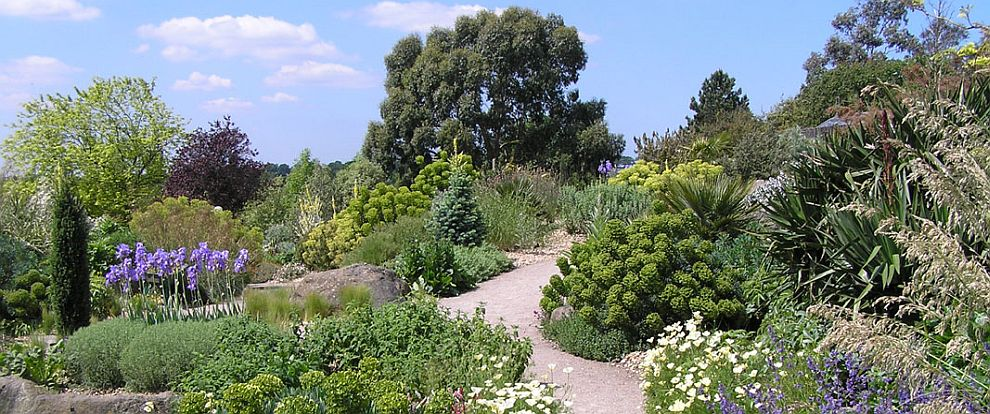 Alison S Gardens Mediterranean Garden: The UK Branch Of The MGS